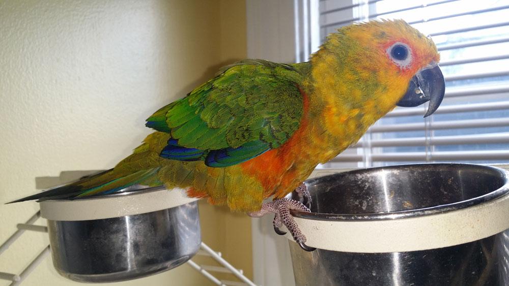 Cool Jazz - Mascot Bird